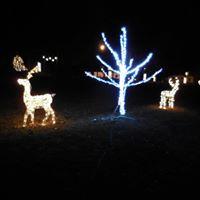 Trees & Deer