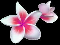 Tango Design logo