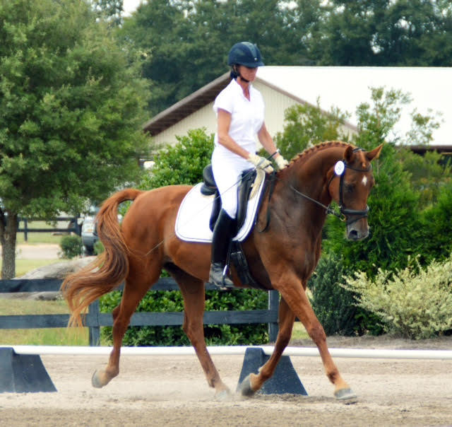 Elaine Lash owensby training dressage horse aiken south carolina