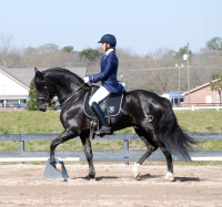elaine lash owensby training PRI stallion dressage horse aiken south carolina