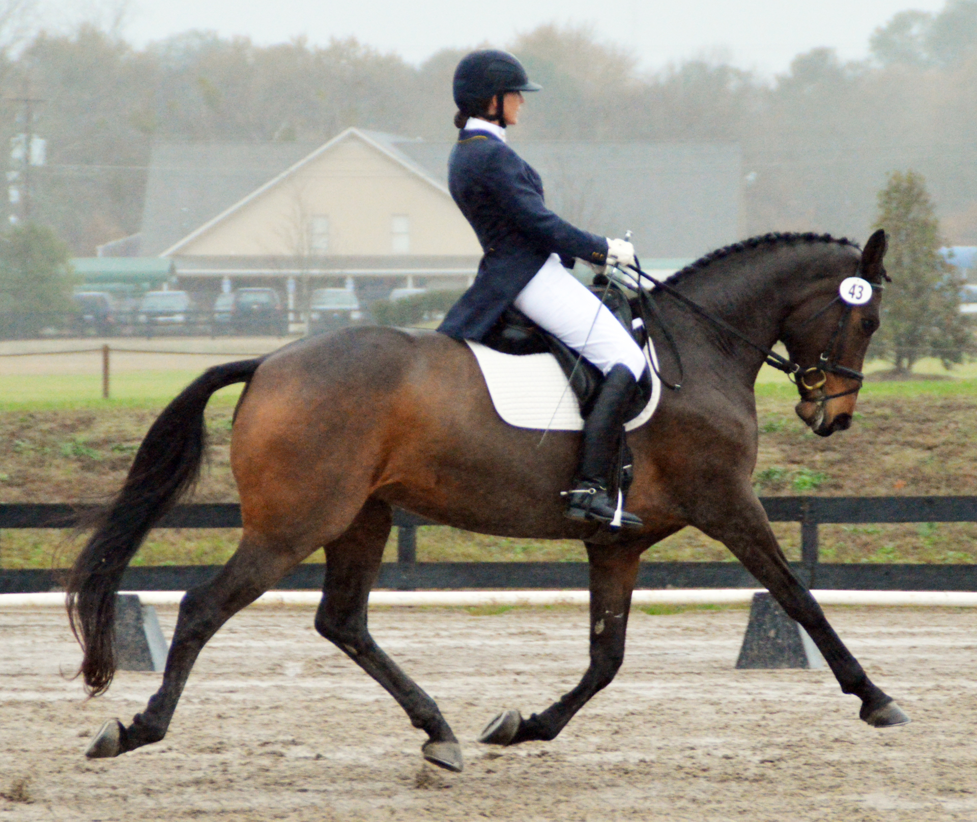 elaine lash owensby training dressage horse Wonderland aiken south carolina