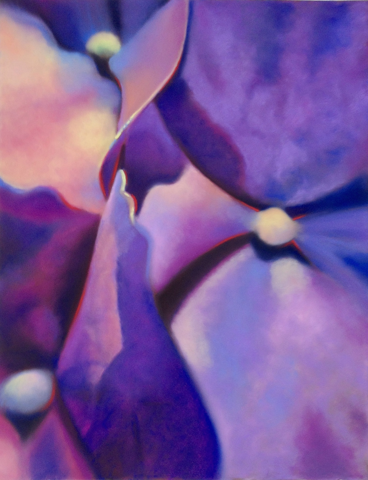 hydrangea abstract #1