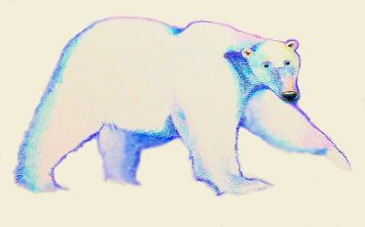 """winter bear"""