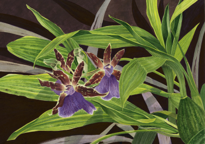 Orchid 'Ladybird'