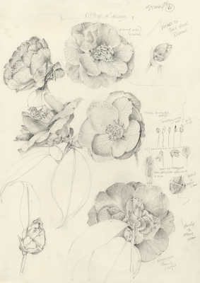 drawing, botanical, nature, sketch book