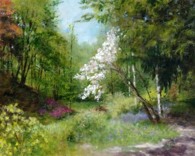 White Magnolia, Ramster Gardens