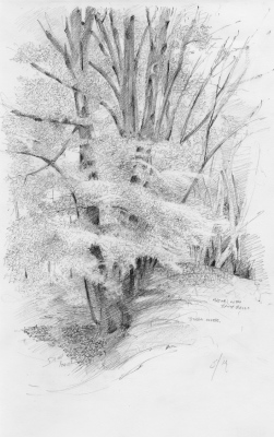 Study of Beech Trees, Winkworth