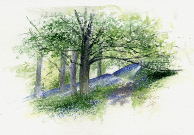 Study, Bluebell slopes, Winkworth