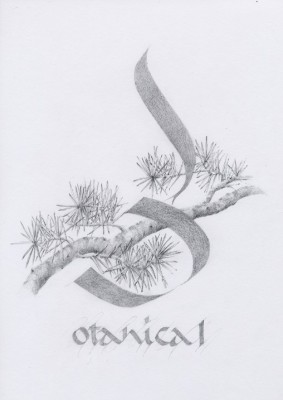 graphite pencil, botanical, floral, design.