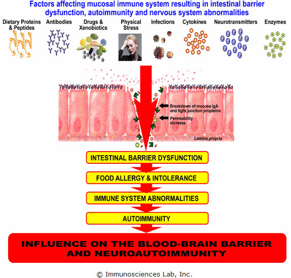 Leaky gut syndrome cause food allergies