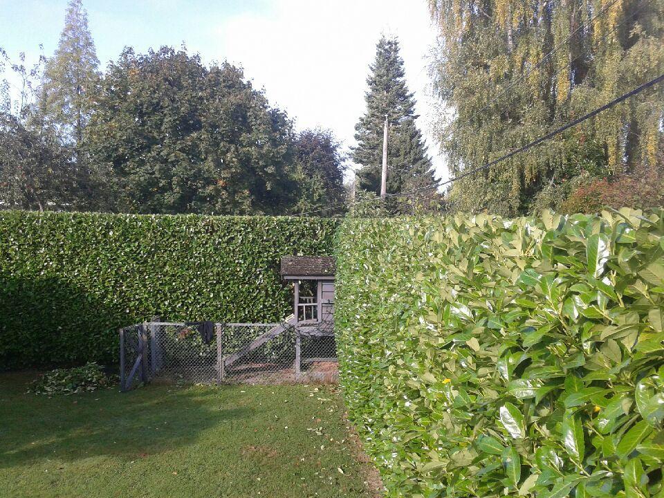 Sharp Hedge
