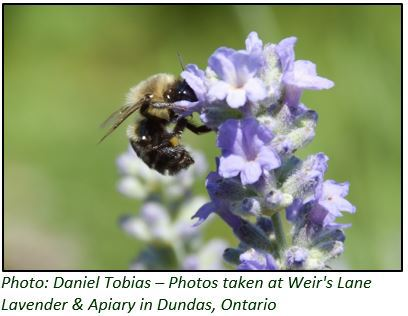 OP-ED:  It is bigger than the bees