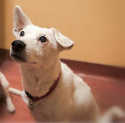 My name is Rascal. I'm a 9 year old Jack Russell Terrier X.
