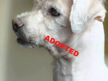 VETS Animal Charity saved my life: