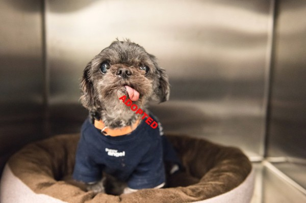 Muffin is a pet kid that required VETS Animal Charity assistance