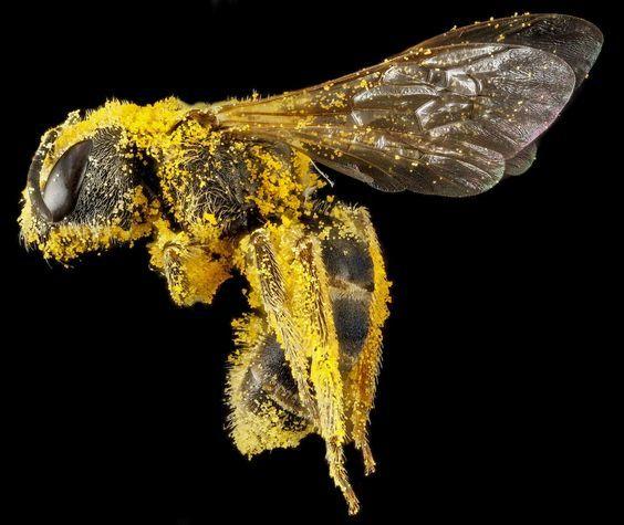 Honey Laundering