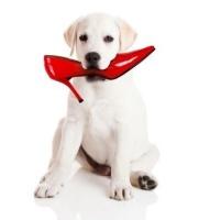 Food Bank Adventures: Puppy Trainer