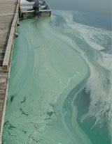 Toronto Public Health issues warning concerning blue-green algae blooms in Humber Bay East