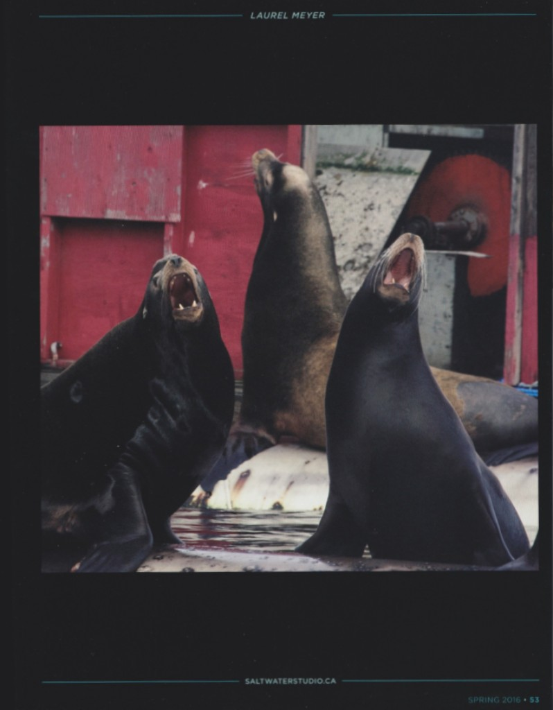 """Sea Lion Song"" - Featured in Gallery Section of CVCOLLECTIVE Spring 2016 Issue"