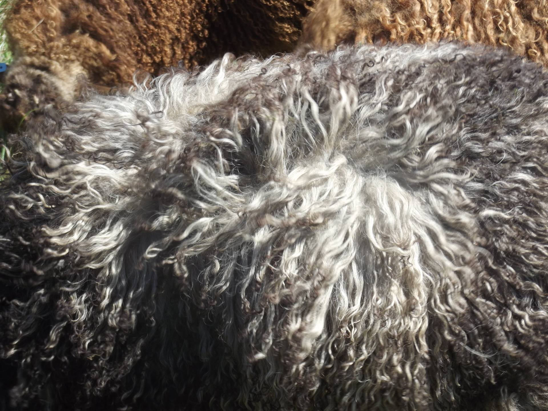 Icelandic Fleeces and Fiber