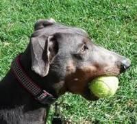 True Heart Adoptable Dogs