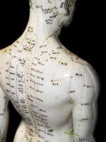 acupuncture model with acupoint locations