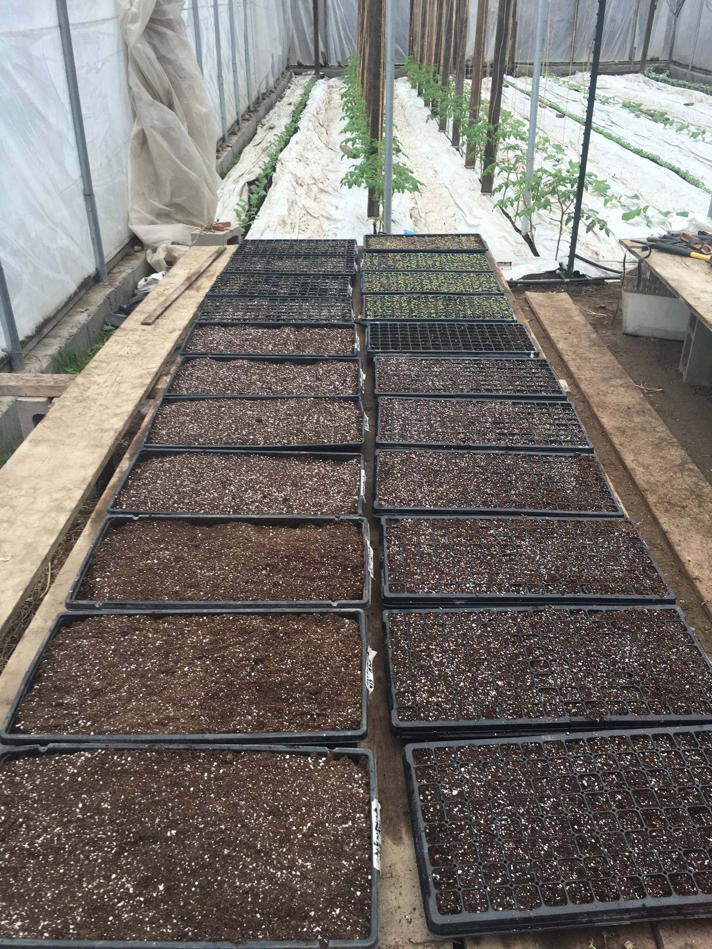 Seed Trays of Herbs