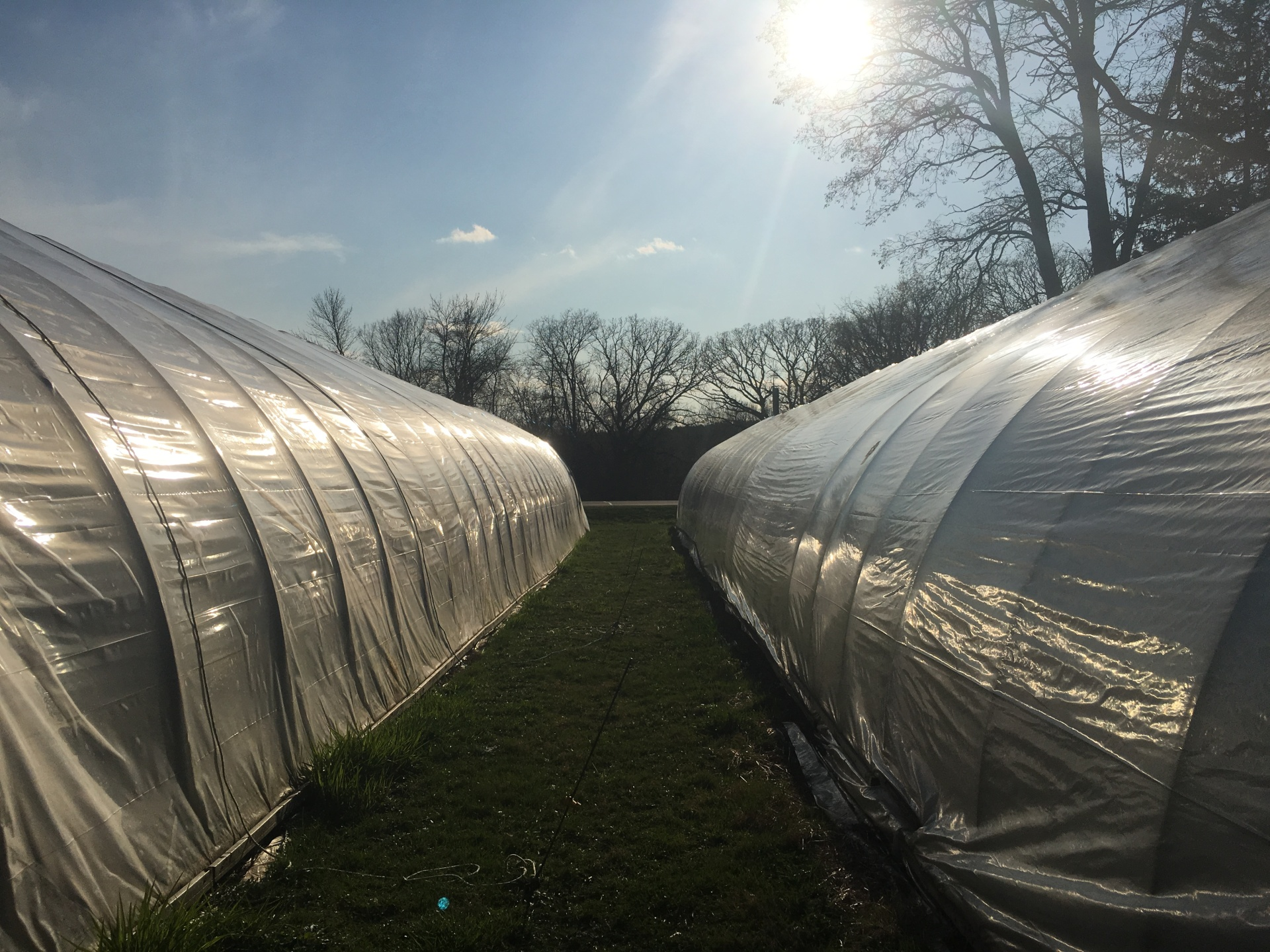 The Greenhouses in early Spring
