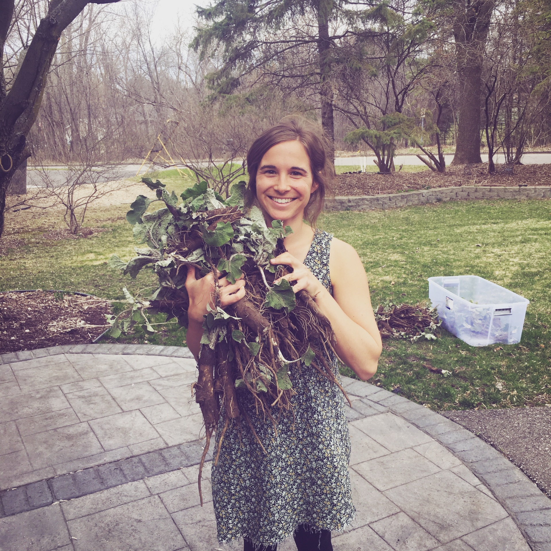 4/9/17: Anna with some of the Burdock Harvest