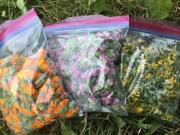 Calendula, Red Clover, and St. John's