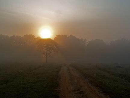 sunrise for pongamia