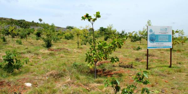 Bioenergy Zone, elite Pongamia
