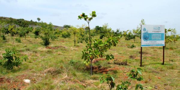 Bioenergy Zone, elite Pongamia