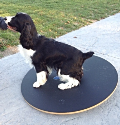 Barbra-Jean in action on the FitPAWS equipment
