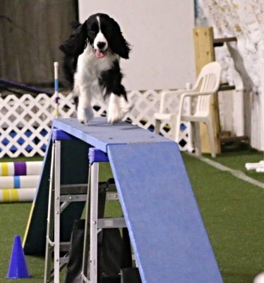 Barbra-Jean at Oxford Dog Sports