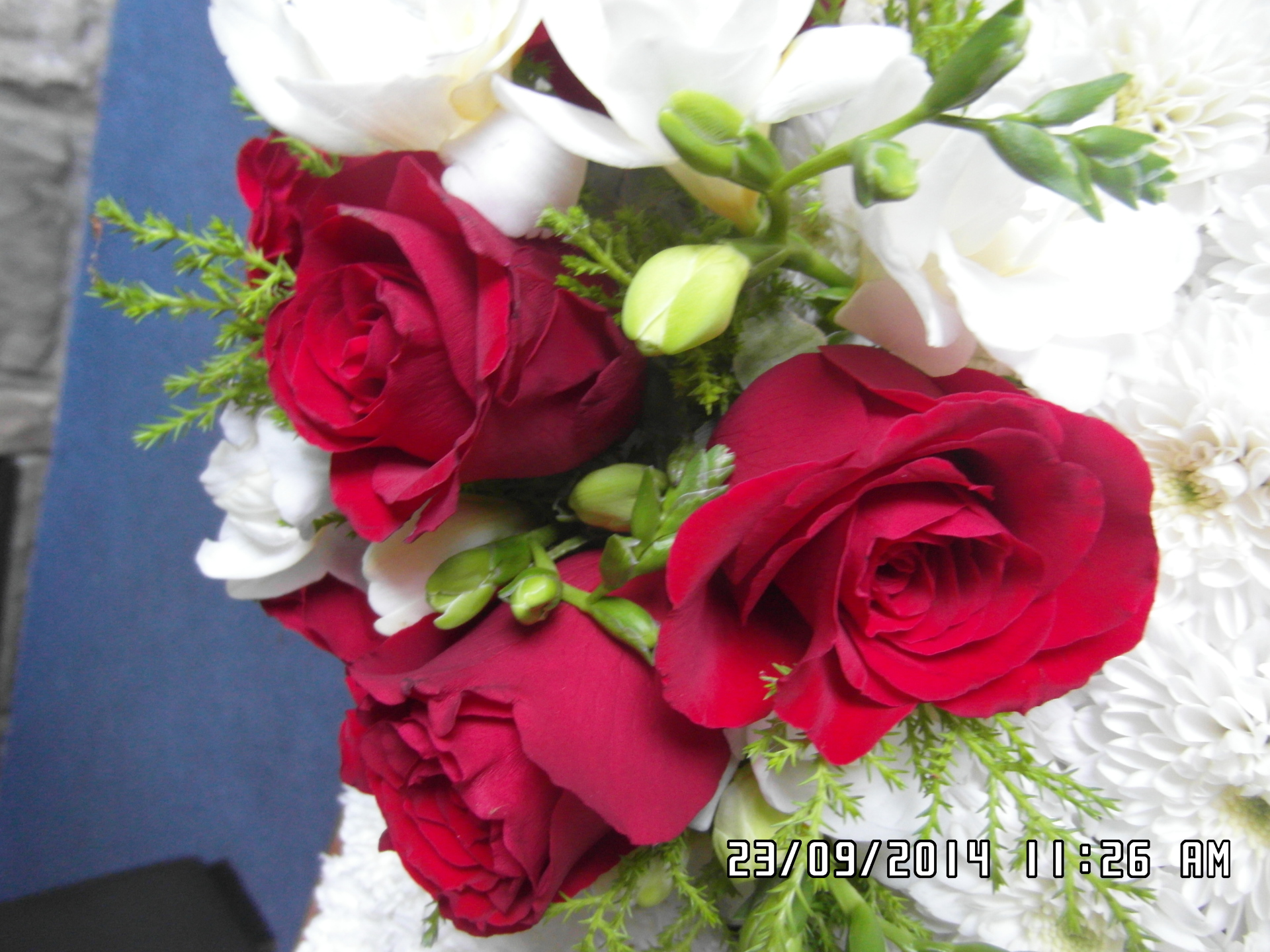 red roses & white freesias in a chairback