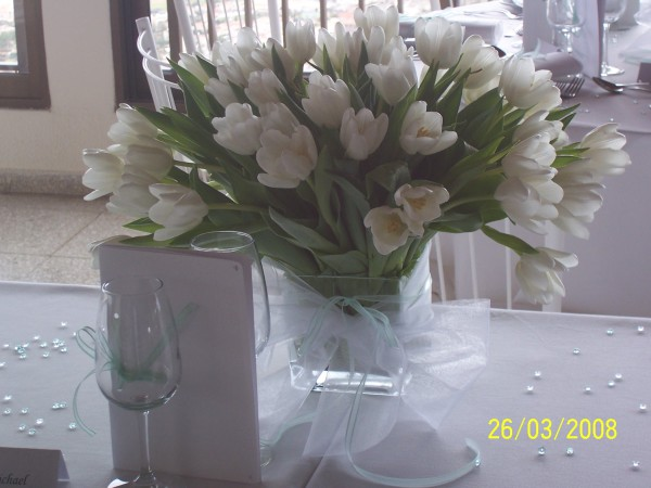 lovely white tulips
