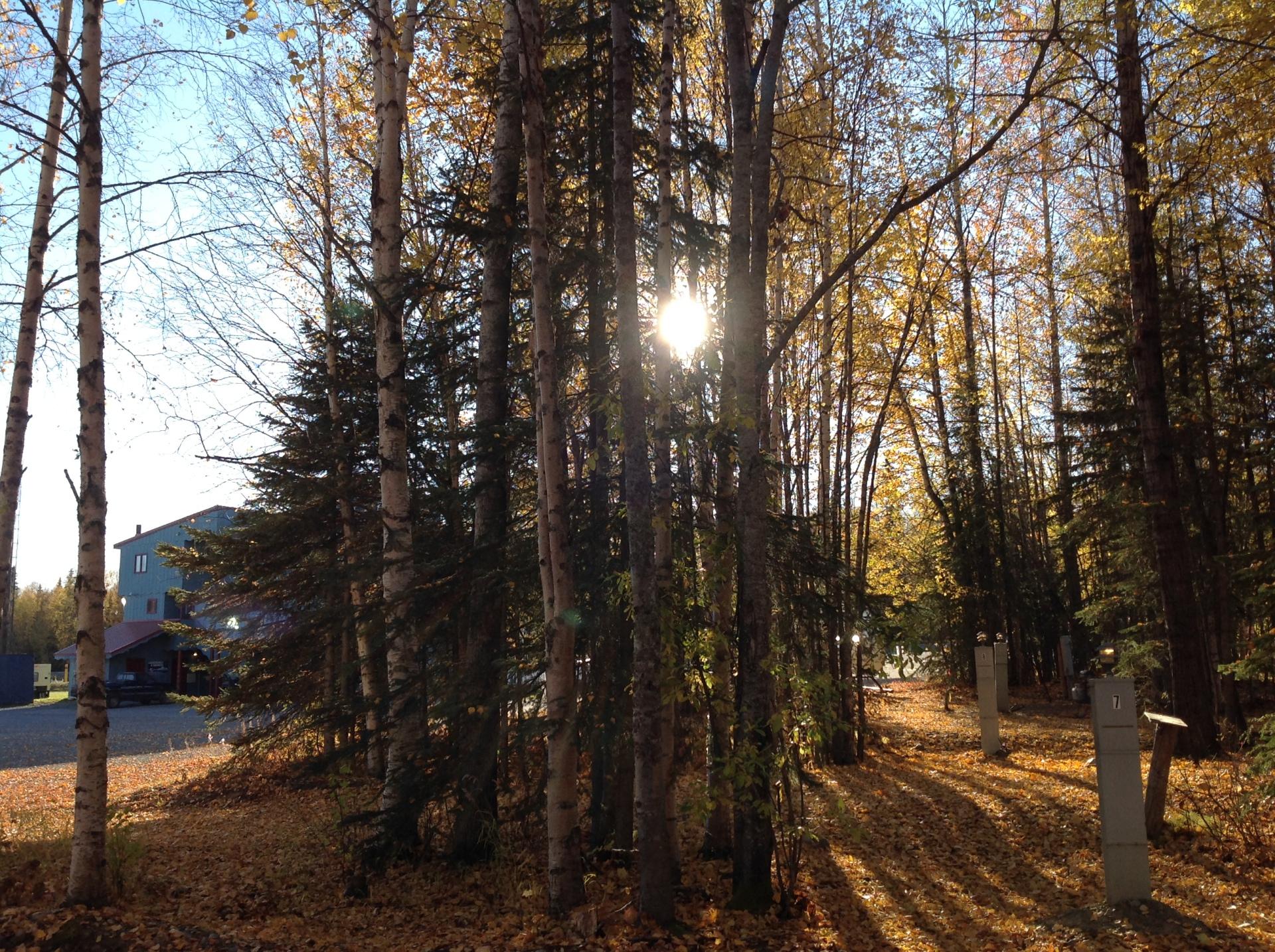 fall sun