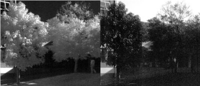 Two bands of a hyperspectral camera image. The coloring of the sky and trees provides a good example of why simple error metrics such as NCC fail for these alignments