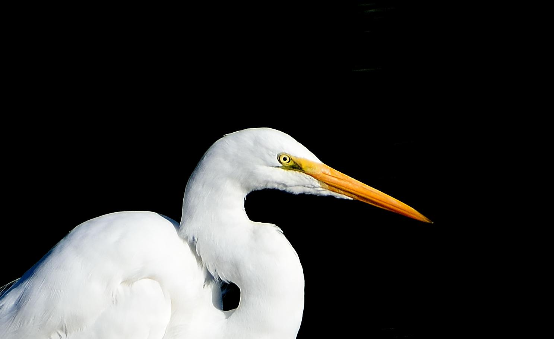 Pasadena Audubon Birdathon Fundraiser