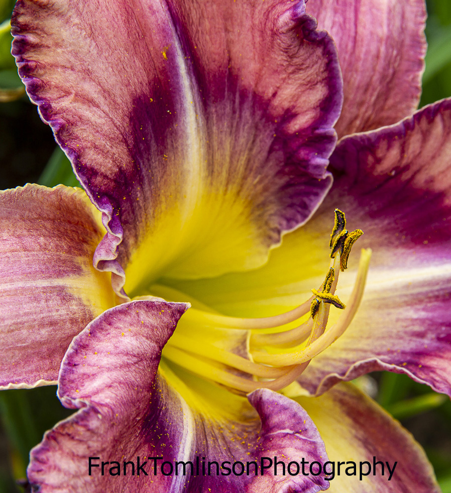 Day Lily Flower