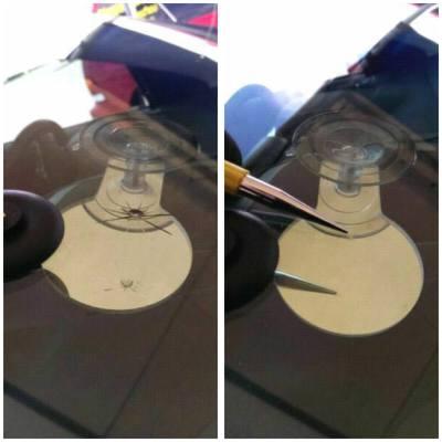 stone chip repair, auto glass Oshawa