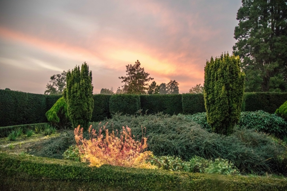 trees in sunset at eynsham hall oxfordshire