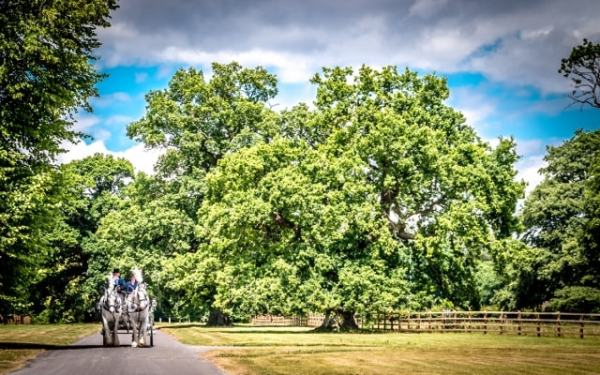 horse and carriage at Eynsham Hall