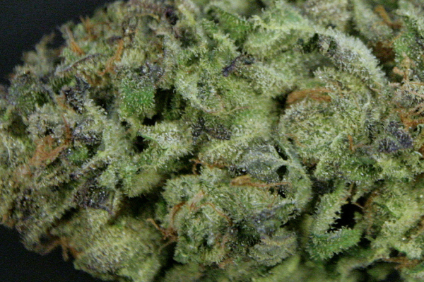 The Maui Waui Strain, and Why it's Popular for your Dispensary