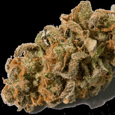 Golden Goat Colorado Recreational Marijuana