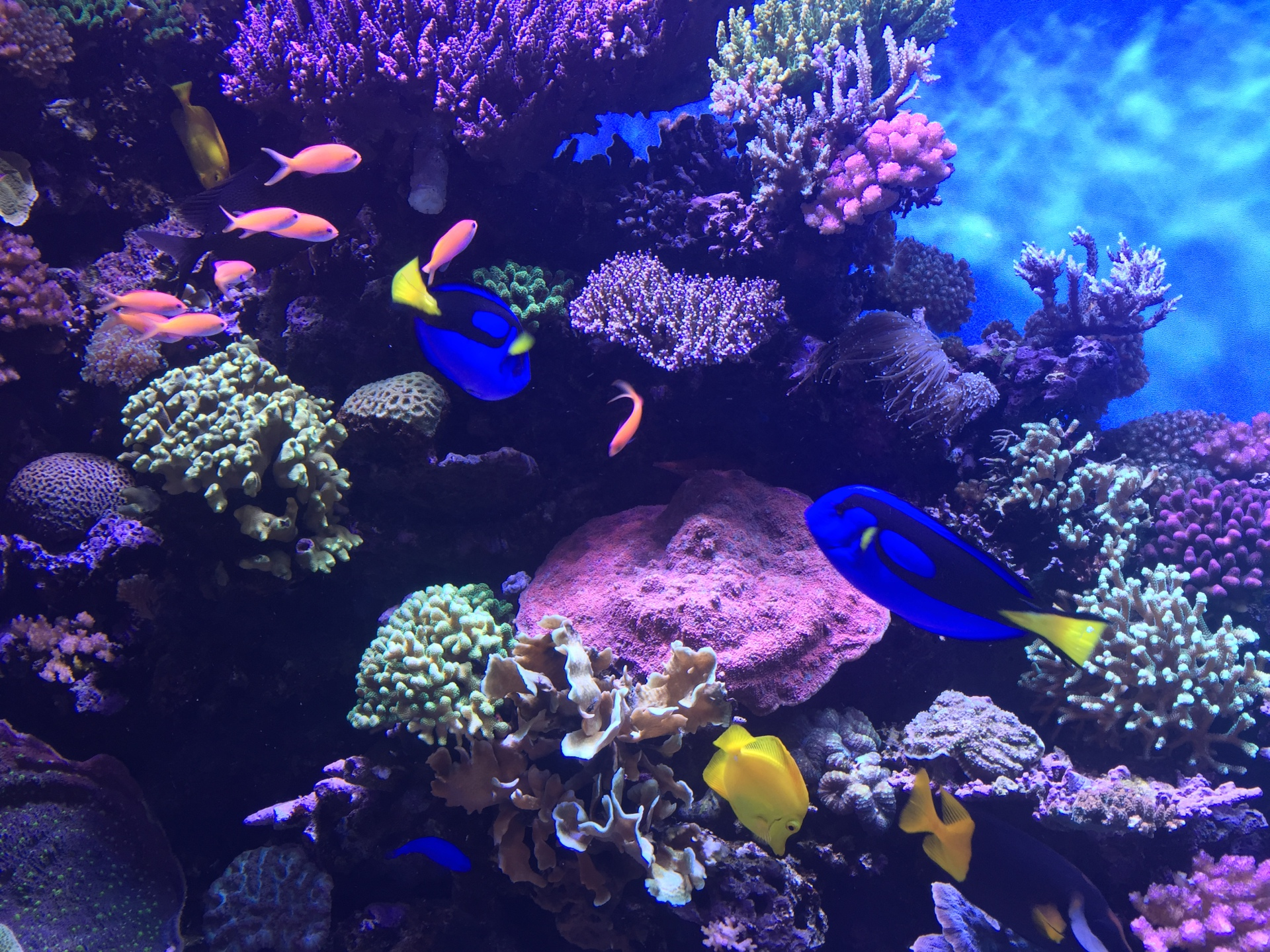 Coral reef snapshot from Monterey Bay