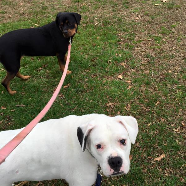 Kane and Layla love their walks at the park <3