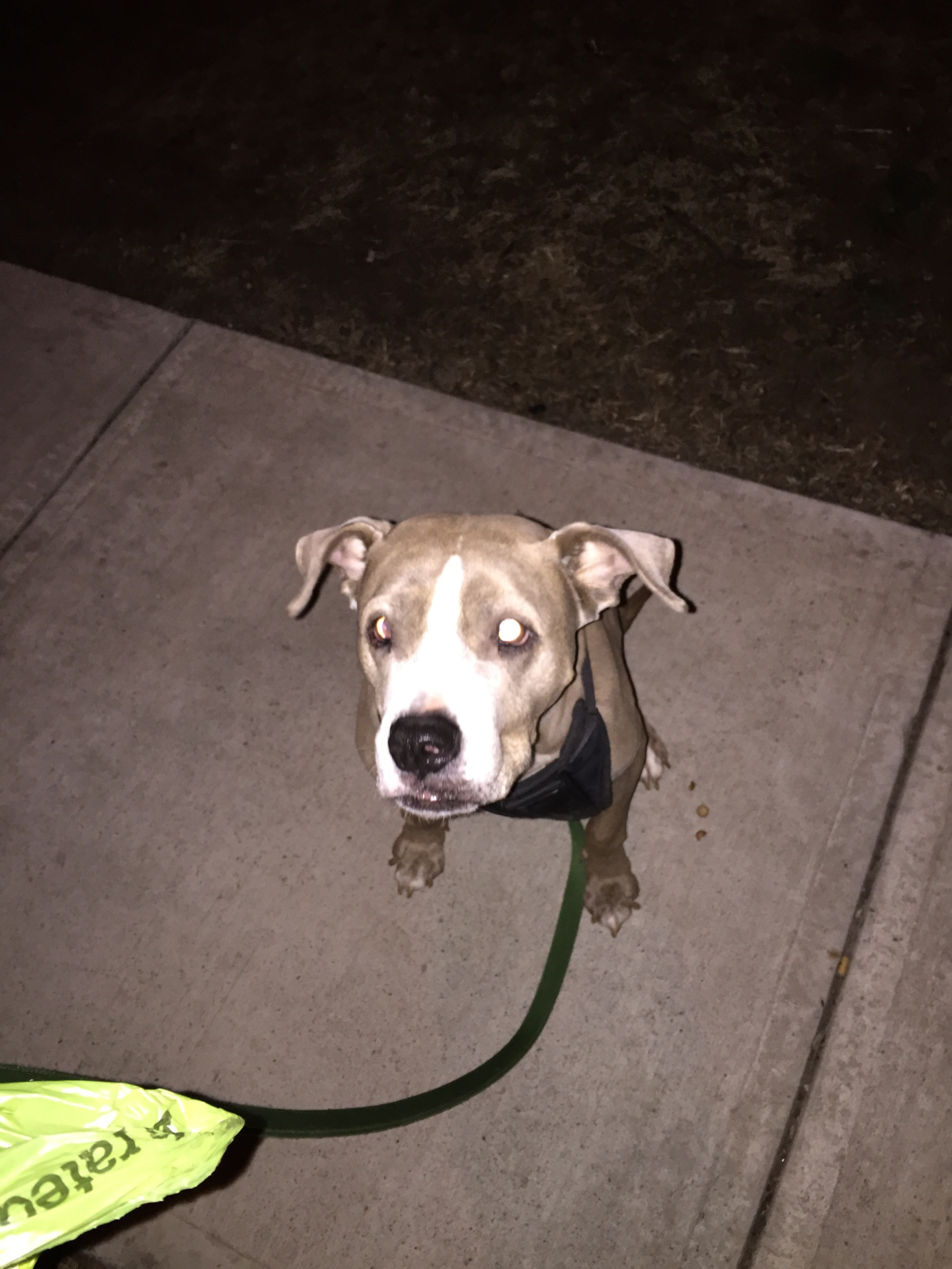 Dolly loves her late night walks <3