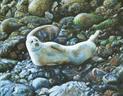 Oil painting of seal lying on rocks